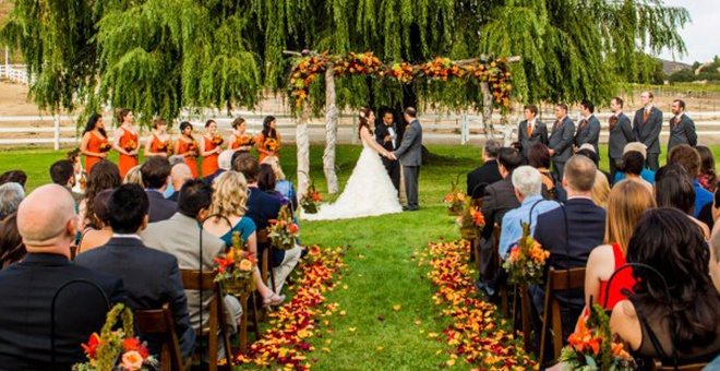 Ceremony Willow Tree